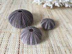 Oursins de mer coquillages naturels par PalmTreesandPelicans