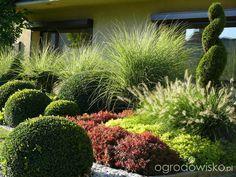 Metamorfozy ogrodowe - strona 180 - Forum ogrodnicze - Ogrodowisko