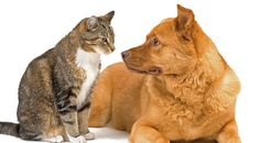 The truth about cats and dogs http://ift.tt/2fexKXi