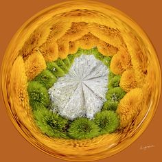 Amazing Circle - Daisy Center.  Copyright Nancy Kirkpatrick Photography