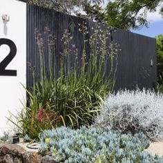 Garden maintenance @ Number 2 Toorak this morning. Love this street frontage with the oversized 2 & dry garden planting into granitic sand. Australian Garden Design, Australian Native Garden, Modern Landscaping, Backyard Landscaping, House Landscape, Landscape Design, Dry Garden, Home And Garden, Coastal Gardens