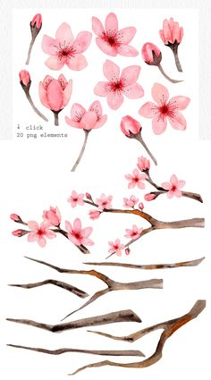 The set of hand drawn watercolor cherry blossom flowers. These illustrations and patterns are suitable for wedding invitation, fabric, packaging, home textile, Cherry Blossom Drawing, Cherry Blossom Watercolor, Cherry Blossom Flowers, Watercolor Flowers, Watercolor Art, Drawing Flowers, Painting Flowers, Cherry Blossom Tattoos, Cherry Blossom Branches