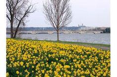 20 Virginia Spring Drives.  Lady Bird Johnson Park.