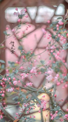 Wallpaper Wa, Chinese Wallpaper, Cute Anime Wallpaper, Scenery Wallpaper, Tumblr Wallpaper, Black Wallpaper, Nature Wallpaper, Wallpaper Backgrounds, Flower Aesthetic