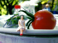 Winner of the Giant Vegetable Contest
