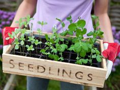<p>Few summer pursuits are more gratifying than watching garden plants you've nurtured from seedlings sprout and produce vegetables that then make it into your mealtime rotation</p> - Visit PaneraBread.com for more inspiration.