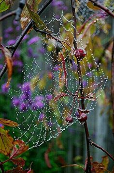 Beautiful dew on spider web. All Nature, Amazing Nature, Spider Art, Spider Webs, Spider Silk, Fotografia Macro, Dew Drops, Rain Drops, Macro Photography