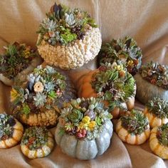 pumpkins and succulents -- gotta wonder how long it would last though...???