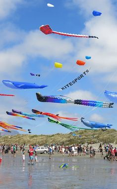 Streets Kite Day - New Brighton Kites For Kids, Go Fly A Kite, Kite Flying, Homemade Kites, Kite Designs, Gulf Shores Alabama, Dry Sand, City Library, Dragons