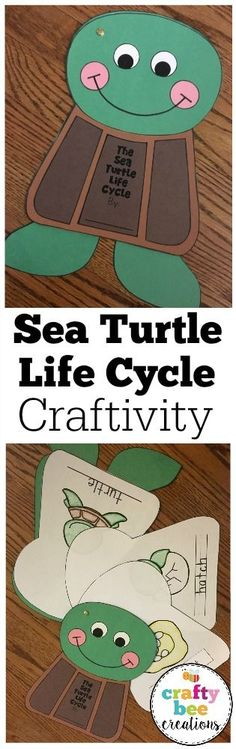 This is a wonderful activity for teaching about the life cycle of the sea turtle.  Students can make the craft using the simple and easy patterns and then color and label the writing pages and assemble the booklet.