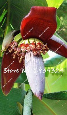 120pcs Banana Seeds,dwarf fruit trees, delicious rare fruit & vegetable seeds
