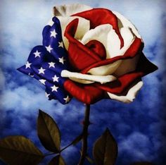 Freedom Rose God Bless Our Soldiers