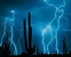 What's special about the above lightning picture is the way that the longer you study the image, more and more cacti appear.  It seems a similar effect to the way that our eyes get accustomed to the dark.