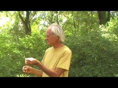 Chlorophyll: Das verkannte blutreinigende Blattgrün