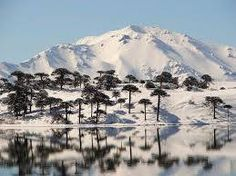 Araucarias behind Caviahue lake, Neuquén province, Argentina Patagonia, Beautiful World, Beautiful Places, First Photo, Mount Rainier, Mount Everest, National Parks, Mountains, Landscape