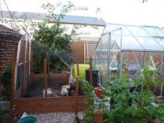 chicken coop with Eglu Go