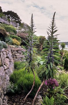 St Michaels Mount Gardens Cornwall England of Exotic Plants, Tropical Plants, St Michael's Mount, Terrace Garden, Canary Islands, Places To See, Coastal, England, Around The Worlds