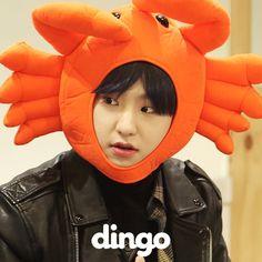 Risultati immagini per hoshi dingo Seventeen Memes, Hoshi Seventeen, Seventeen Debut, Woozi, Jeonghan, Choi Hansol, Won Woo, Hip Hop, Cute Hamsters
