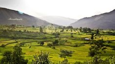 The landscape of paddy fields near Mima Angami village, Nagaland