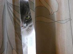 Peek-a-Boo V