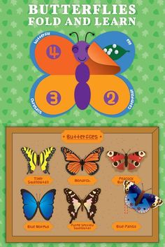 Butterflies Fold & Learn English and Spanish