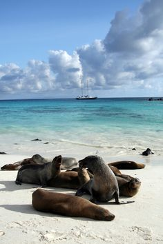 Cruising through and exploring the glorious archipelago known as the Galapagos Islands is a traveler's dream. Here's your perfect itinerary for an unforgettable trip to the famous islands! Galapagos Trip, Galapagos Islands, Archipelago, Ecuador, Exploring, Things To Do, Tourism, Cruise, Places