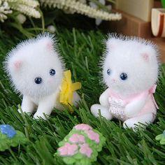 Persis Persian Cat Family Twins