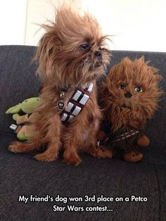 Dog In Chewbacca's Cosplay // tags: funny pictures - funny photos - funny images - funny pics - funny quotes - #lol #humor #funnypictures