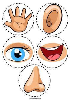 Five Senses Activity Printable Five Senses Activity For Preschool Students Teachersmag Com Five Senses Preschool, 5 Senses Activities, My Five Senses, Body Preschool, Preschool Learning Activities, Preschool Classroom, Preschool Worksheets, Toddler Activities, Sorting Activities