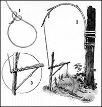Squirrel snare, twitch-up snare, bird  fish - Animal Traps.