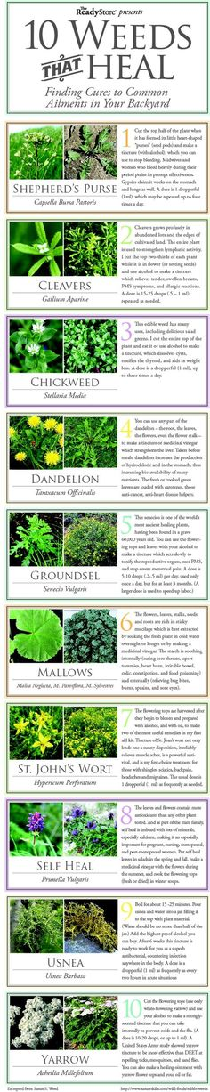 A new blog post -- 13 Herbs or Weeds That Heal -- originated because of this graphic -- 10 Weeds That Heal.  I did some research and discovered that three plants had not been included, so I included them in the blog post.  Take a look at this URL:    http://plantyourherbs.com/13-herbs-or-weeds-that-heal/