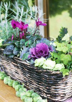 Taustalla kasvava italianolkikukka pärjää pikkupakkasessakin. Koristekaali kuuluu perinteikkäisiin syyskasveihin. Alalehtien kellastuminen ja kariseminen kuuluu sen luonteeseen, mutta liikakastelu lisää ongelmaa. Ruusukaalin kerä muuntuu lehteväksi ruusukkeeksi, kun rullaat lehtien reunat alas. Text Outi Tynys, photo Minna Mercke Schmidt viherpiha.fi Outside Planters, Autumn Display, My Secret Garden, Fall Flowers, Autumn Trees, Autumn Inspiration, Potted Plants, Vegetable Garden, Container Gardening