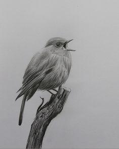 Pencil Sketch Drawing, Bird Sketch, Drawing Art, Pencil Drawings Of Animals, Animal Sketches, Bird Drawings, European Robin, Robin Bird, Bird Pictures