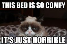 this bed is so comfy its just horrible - Beds Are Horrible, Grumpy Cat