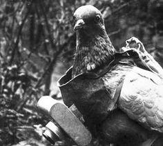 Palomas fotógrafas, los insólitos drones espía de la Primera Guerra Mundial / @hojaderouter | #futurama
