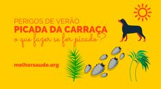 PICADA DA CARRAÇA melhorsaude.org