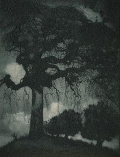 Rudolf Koppitz, Ash Tree, circa 1912, Gum Bichromate print 29.2 x 22.9 cm…