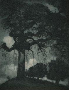 Rudolf Koppitz, Ash Tree, - 1912