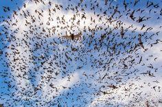 Finalists Of The 2014 Wildlife Photographer Of The Year  - 'Bat Festival' by João Paulo Krajewski