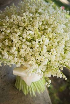 Bouquet of Lily of The Valley flowers wrapped in white ribbon White Flowers, Beautiful Flowers, Tiny Flowers, Birth Flowers, Flowers Garden, Exotic Flowers, Tropical Flowers, Yellow Roses, Simply Beautiful