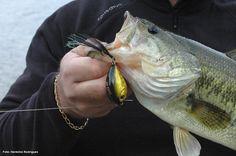 2 ideias pré-concebidas que prejudicam o desempenho do pescador