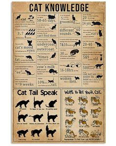 Knowledge Cats Poster by TeeHin. Thousands of designs available for you on shirts, hoodies, posters and mugs . Made in USA, Worldwide Shipping. Witchcraft Spell Books, Wiccan Spell Book, Witch Spell, Wiccan Spells, Magic Spells, Simple Life Hacks, Useful Life Hacks, Animals And Pets, Funny Animals