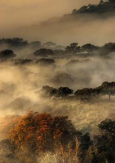 Extremadura (niebla al amanecer en Monfragüe) by jpgamero, via Flickr