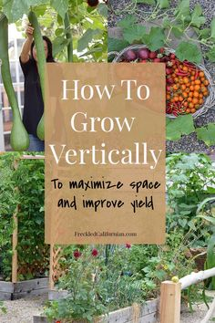 Learn how I grow more food in my small garden by growing vertically! These techniques are perfect for urban gardens, patios, and small spaces and they will also help improve the health of your vegetables as well. Growing Plants, Growing Vegetables, Gardening For Beginners, Gardening Tips, Gardening Direct, Fine Gardening, Home Vegetable Garden, Vegetable Garden Container Ideas, Vertical Garden Vegetables