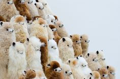 ALPACA ARMY. Aren't they so cute??  Check out all the different colours available. If alpacas aren't your thing, we have many other cute animals available too...   Just go to:   → www.alpacadoro.com ←  #alpacas #alpacawool #alpacadoro #wool #toys #fluffytoys #stuffedanimals #fluffy #soft