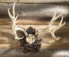 1000 Images About Deer Antlers On Pinterest Antlers