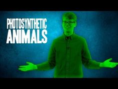 3 Amazing Photosynthetic Animals High School Biology, Ap Biology, Science Biology, Science Humor, Science Education, Life Science, Cell Biology, Science Fun, Physical Science