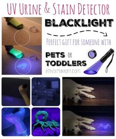 Pet owner gift ideas, How to get rid of pet oder in your house, UV Urine & Stain Detector Blacklight perfect for dogs, cats or even toddlers Diy Black Light, Cleaning Pet Urine, Litter Box Smell, Cat Pee Smell, Urine Stains, Cat Hacks, Diy Cleaning Products, Cleaning Recipes, Cleaning Tips