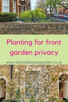 Ideas for small and large front gardens - create maximum kerb appeal! #middlesizedgarden Privacy Trellis, Garden Privacy Screen, Privacy Hedge, Redrow Homes, Weeping Trees, Evergreen Hedge, Kerb Appeal, Front Gardens, Georgian Homes