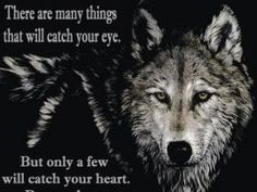 Native American pictures and quotes to share on facebook | Wolf Quote Photos, Wolf Quote Pictures, Wolf Quote Images